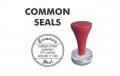 Common Seals